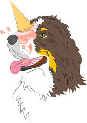 cane bovaro del bernese con gelato