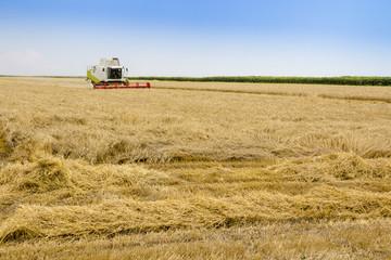 Foto auf Gartenposter Landschappen combine harvesting a field of wheat