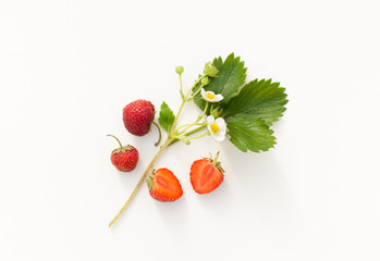 The berries of garden strawberry with leaves on a white background