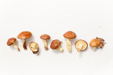 Fresh boletus mushrooms on white background