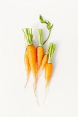 Young washed carrots with tails on white background