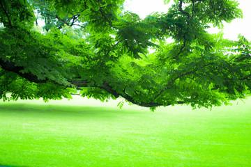 Aluminium Prints Green Beautiful greenery of lush summer tree and green grass