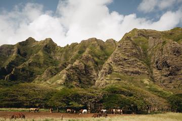 Mountain in Oahu