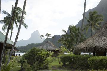 Bungalows in tropical resort