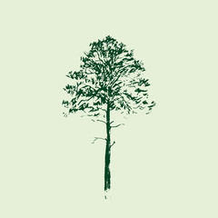 Pine tree. Line drawing. Green colors. Hand drawn sketch. Vector illustration.