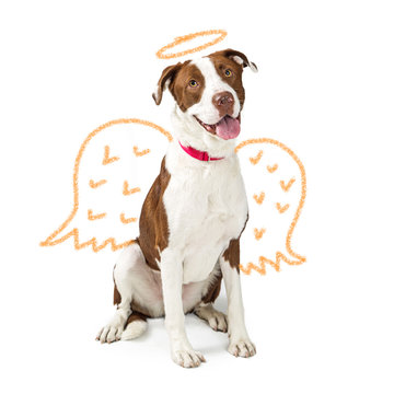 Innocent Dog With Drawn Angel Wings