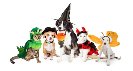 Row of Cats and Dogs in Halloween Costumes