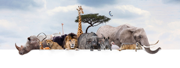 Safari Zoo Animals Over Web Banner