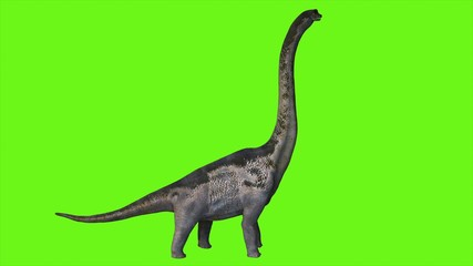 Dinosaur Braquiossauro on green screen. 3D Rendering.