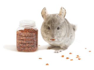 Cute chinchilla is eating dry carrot near full jar of food isolated on white