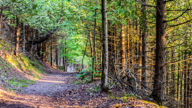 Sunny Wooded Trail in Northern Michigan