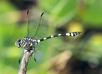 dragonfly with wings out stretched