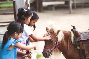 Asian children touching and playing with pony in the farm with fun