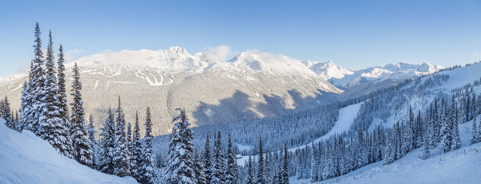 Snowy mountain trees with a view overlooking Blackcomb Mountain.