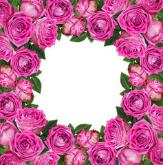 Pink rose flowers in a square floral frame