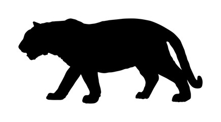 Tiger vector silhouette illustration isolated on white background. Big wild cat. Siberian tiger (Amur tiger - Panthera tigris altaica) or Bengal tiger.