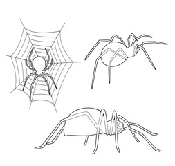 Insect Set Cute Spider Cartoon Vector Coloring Book