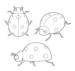 Insect Set Cute Ladybug Cartoon Vector Coloring Book