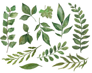 Watercolor leaves and branches collection on the white background. Natural green floral elements for decoration.