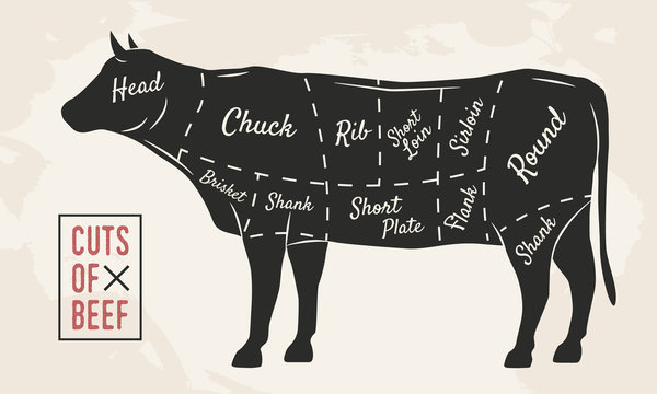 Meat cuts. Beef cuts. Vintage Poster for Restaurant or butcher shop. Retro diagram. Vector illustration.