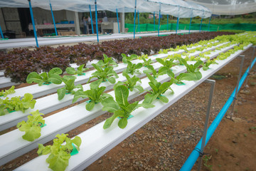 Hydroponic farm for health market