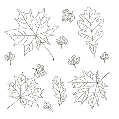 vector contour maple oak carved leaf tree element coloring book for your design and text spring summer autumn season