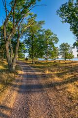 Beautiful forest path in Kalmar, Sweden