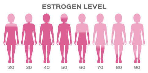 estrogen Hormone Level vector / man
