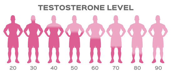 testosterone hormone level vector / man