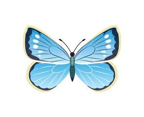 Morpho Peleides Blue Butterfly Vector Illustration