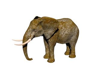 Afrikanischer Elefant mit Stoßzähnen