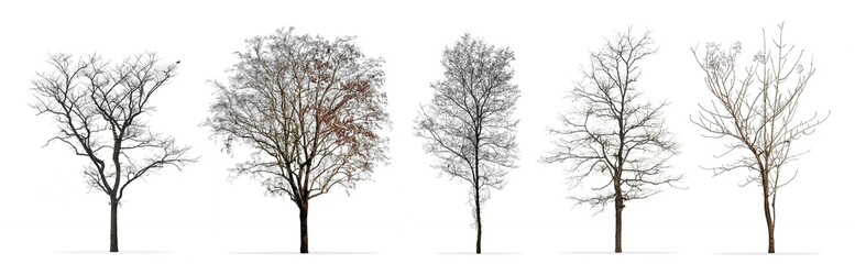 Set of winter trees without leaves isolated on white background Wall mural
