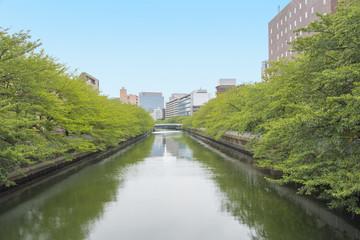 東京都江東区を流れる大横川