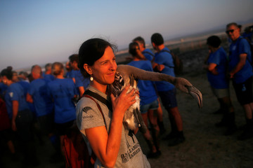 A volunteer holds a flamingo chick before fitting it with an identity ring in the Fuente de Piedra natural reserve near Malaga