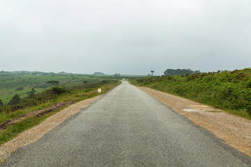 Colorfulsummer morning road. A view of the old asphalt road through the green fields and the morning fog