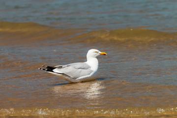 Seagulls walking across the beach and ocean in a coastal town