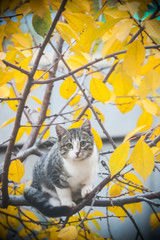 Young cat on branch