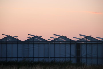 Sunset over a greenhouse with roses in Moerkapelle where windows are open to cool the roses