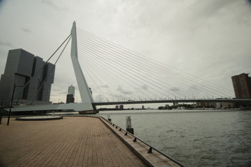 skyline of river Nieuwe maas in the middle of Rotterdam with the Erasmusbrug bridge with nickname the Swan.