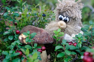 Hob porcino berries / Wood spirit has found a cep (porchino, Boletus edulis lat.) amidst cowberries, Puumala, Finland