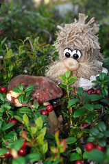 Hob and porcino in berries / Wood spirit has found a cep (porchino, Boletus edulis lat.) amidst cowberries, Puumala, Finland