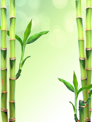 Fresh bamboo background with copy space