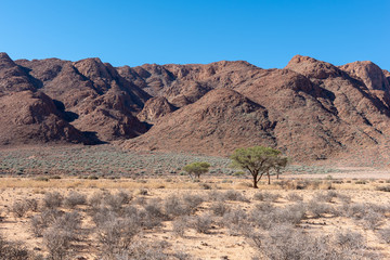 Dry savannah with green thorn trees with mountains in the background, Namibia