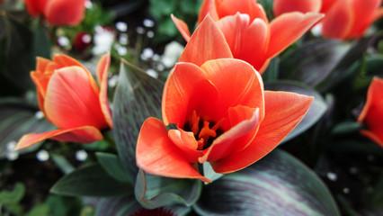 Makro orangene exotische spitze Blume Pflanze