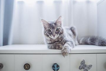 猫 ポートレート