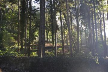 Sun thorugh the trees