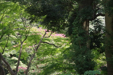 野毛山動物園内の森林