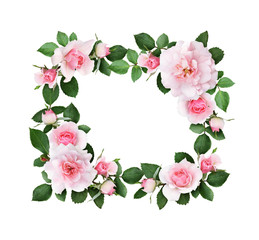 Pink rose flowers and green leaves in a floral frame