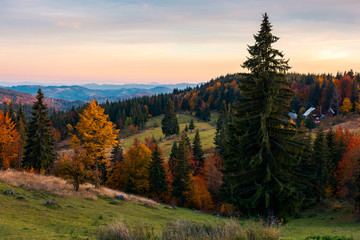 reddish dawn in mountains. beautiful autumn countryside. village near the forest in the distance