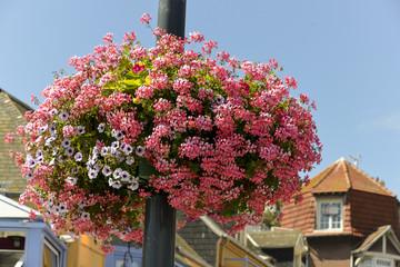 Géranium, Pétunia, Bac à fleurs, Le Tréport, Seine Maritime, région Normandie, 76